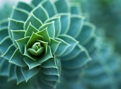Wallpapers Nature Spirale