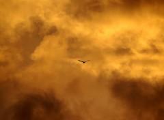 Fonds d'écran Nature nuage en feu
