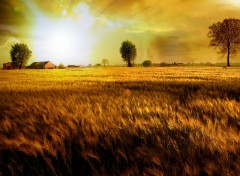 Wallpapers Nature Fields Of Gold