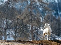 Wallpapers Animals Un cheval blanc dans la forêt !!!