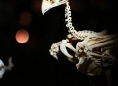 Fonds d'écran Animaux Squelette