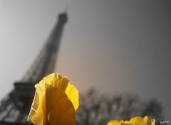 Fonds d'écran Constructions et architecture fleur eternelle