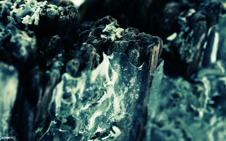 Wallpapers Nature Moss - Lichens Lichen VS glace
