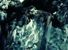 Wallpapers Nature Lichen VS glace