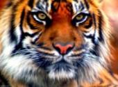 Wallpapers Digital Art tête de tigre