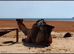 Fonds d'écran Voyages : Afrique Image sans titre N°230528