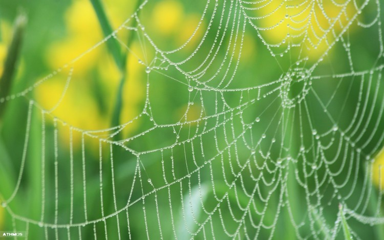 Wallpapers Animals Spiders Perles H2O