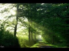 Wallpapers Nature Le soleil dans les sous bois
