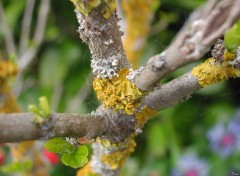 Wallpapers Nature Lichen