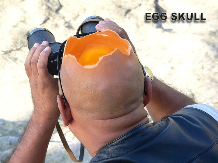 Fonds d'écran Humour Divers egg skull