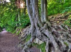 Fonds d'écran Nature Image sans titre N°237803