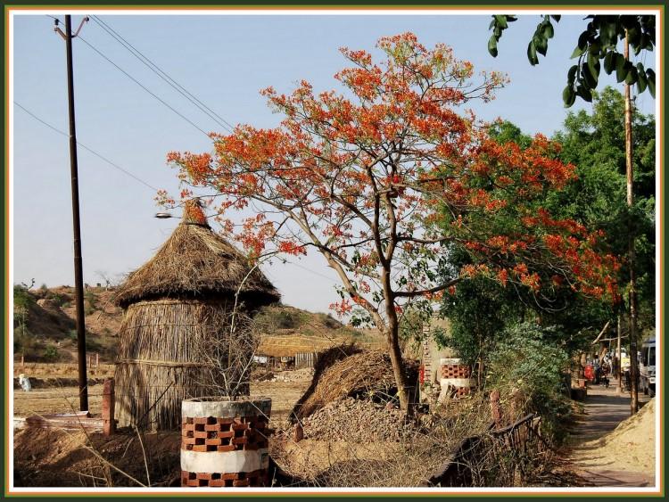 Wallpapers Trips : Asia India Sur la route de Fatehpur Sikri - Rajasthan