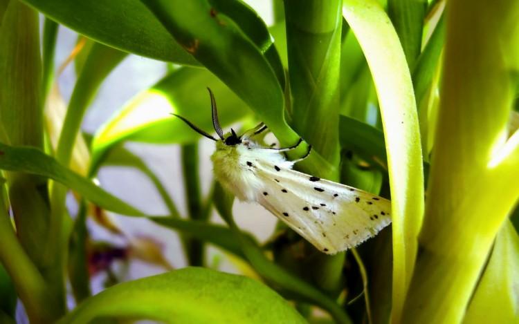 Fonds d'écran Animaux Insectes - Divers Wallpaper N°240033