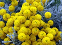 Fonds d'écran Nature jaune