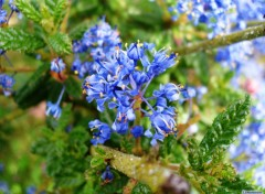Wallpapers Nature Parfum Azur