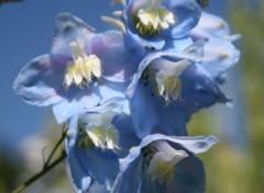 Fonds d'écran Nature bleues