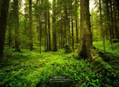Wallpapers Nature The Forest