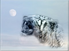 Wallpapers Animals tigre lune