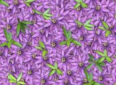 Fonds d'écran Art - Numérique Flowers