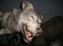 Fonds d'écran Animaux parc animalier argeles gazost