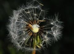 Fonds d'écran Nature Un ptit coup de vent et tout s'en va