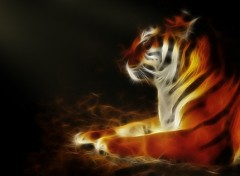 Wallpapers Animals Tigry le Tigre