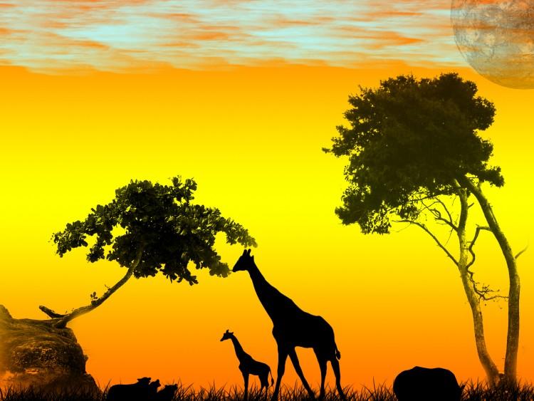 Fonds d'écran Art - Numérique Nature - Paysages Savane