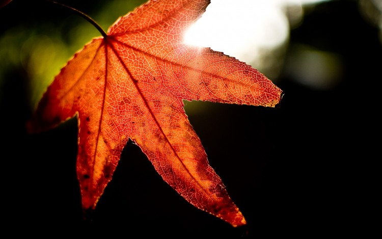 Fonds d'écran Nature Saisons - Automne Rouge d'automne