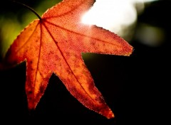 Wallpapers Nature Rouge d'automne