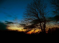 Wallpapers Nature Silhouette