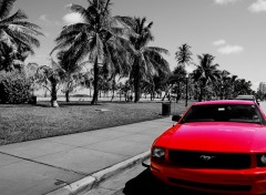 Wallpapers Cars Mustand on Miami Beach Bvd