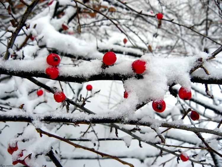 Wallpapers Nature Saisons - Winter Wallpaper N°251858