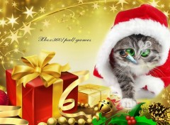 Wallpapers Humor noel chat