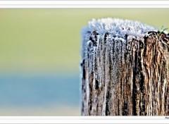 Fonds d'écran Nature Frozen