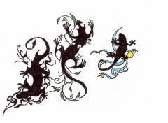 Wallpapers Art - Pencil salamandre