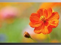 Fonds d'écran Nature Colors