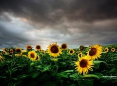Fonds d'écran Nature L'orage