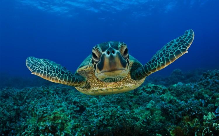 fond d'ecran gratuit de tortue de terre