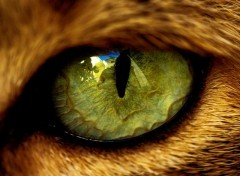 Wallpapers Animals Yeux de chats