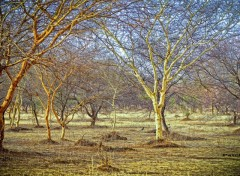 Fonds d'écran Nature Forest
