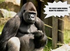 Fonds d'écran Humour Garre à vos dents ! :)
