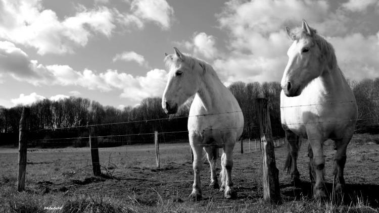 Fonds d'écran Animaux Chevaux 1 cheval, des chevaux ... ^^