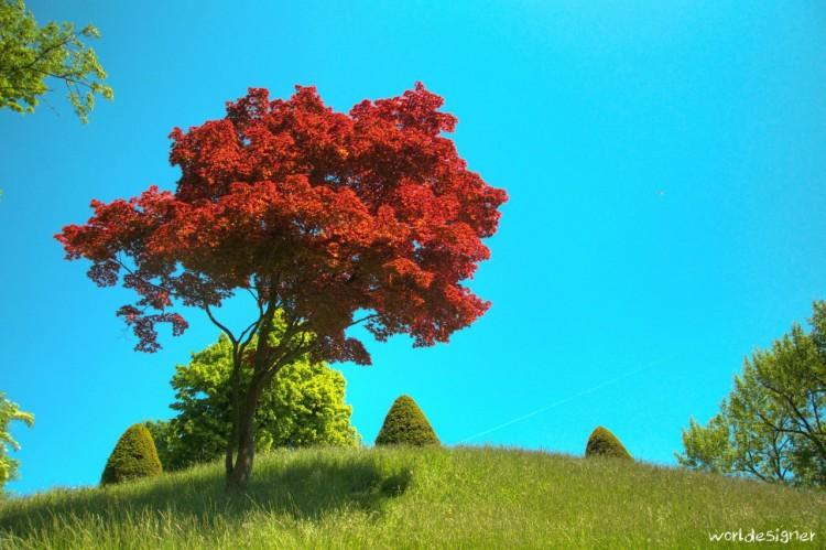 Wallpapers Nature Trees - Forests Sur la colline