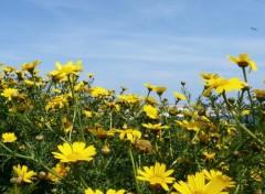 Fonds d'écran Nature Fleurs à Bonifacio