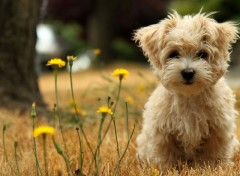 Wallpapers Animals Puppy
