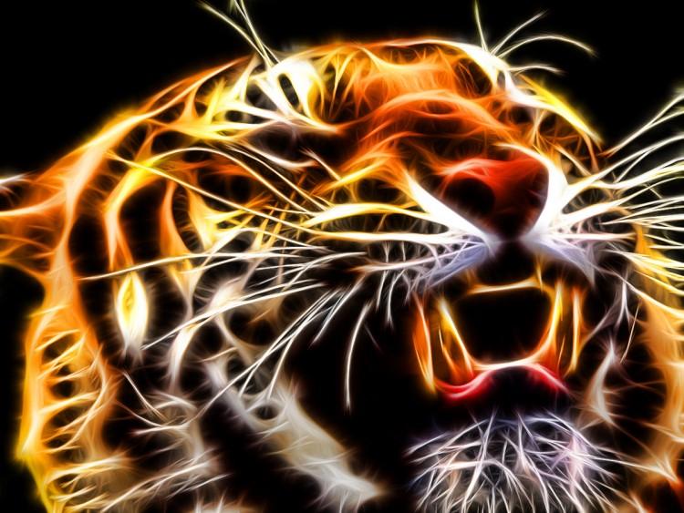 Wallpapers Animals Felines - Tigers Wallpaper N°263131