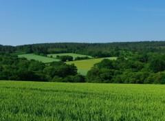 Fonds d'écran Nature Champ de blé encore vert et forêt