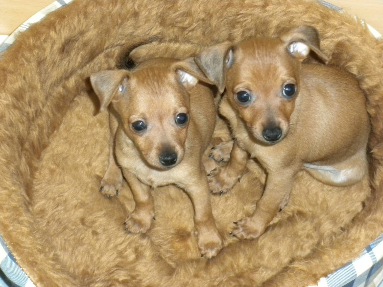 Fonds d 39 cran animaux fonds d 39 cran chiens chiot for Fond ecran chiot
