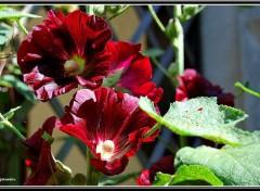 Fonds d'écran Nature Les fleurs d'été
