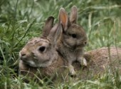 Wallpapers Animals Very Cute Rabbits